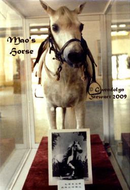 MAO ZEDONG'S HORSE  On Display in Yan'an, China, Photograpshed by GWENDOLYN STEWART, c. 2013;  All Rights Reserved